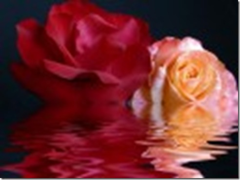 flower_-_Water_and_Roses