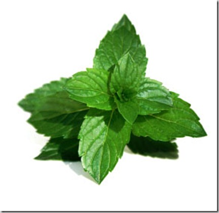 Mint_2DLeaves_2Dbenefit
